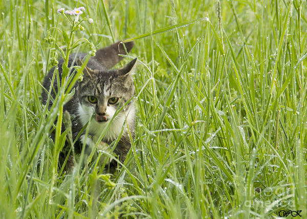 Photograph - Kitty In Grass by Wanda Krack