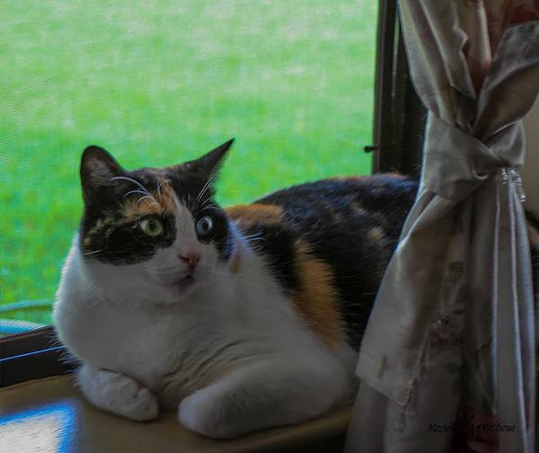 Wall Art - Photograph - Kitty In The Window by Mechala Matthews