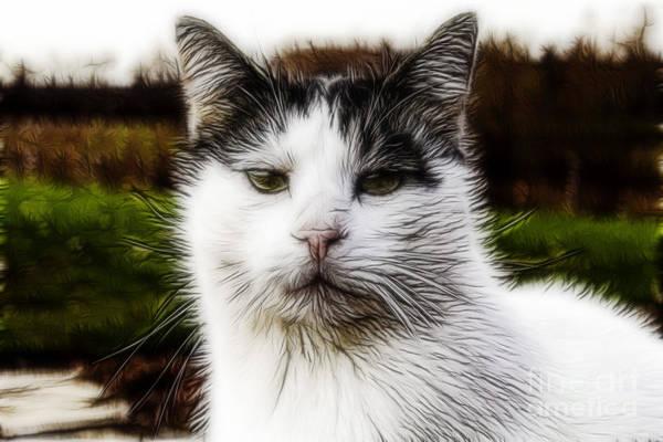 Photograph - Kitty Kat by Jim Lepard