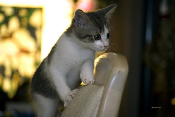 Wall Art - Photograph - Kitty On High Alert by Thomas Woolworth