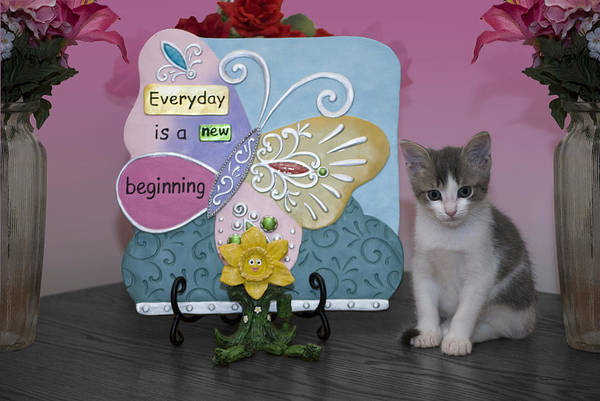 Wall Art - Photograph - Kitty Says Every Day Is A New Beginning by Thomas Woolworth