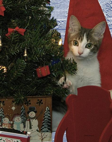Wall Art - Photograph - Kitty Says Happy Holidays by Thomas Woolworth