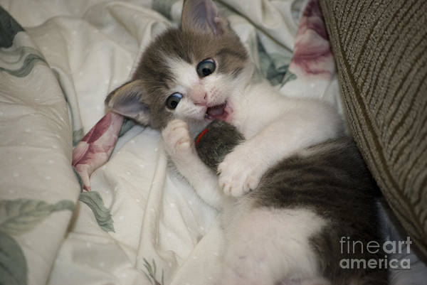 Wall Art - Photograph - Kitty Says Lets Talk Little Mouse by Thomas Woolworth