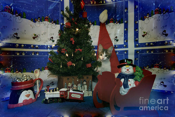 Wall Art - Photograph - Kitty Says Merry Xmas by Thomas Woolworth