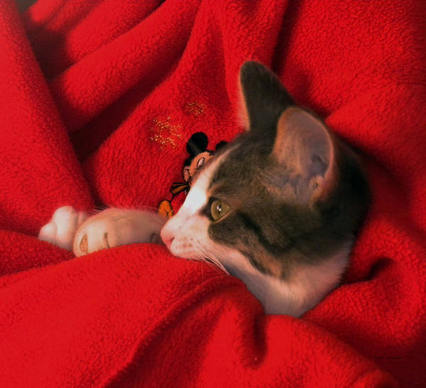 Wall Art - Photograph - Kitty Snuggled Up With Mr Mouse by Thomas Woolworth