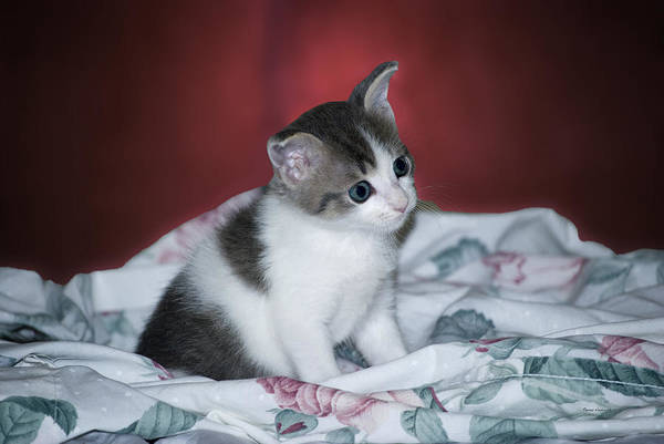 Wall Art - Photograph - Kitty Taking A Moment To Chill by Thomas Woolworth