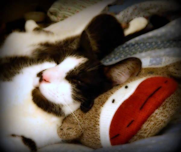 Sock Monkey Photograph - Kitty Ultimate Luxury by Kathy Barney