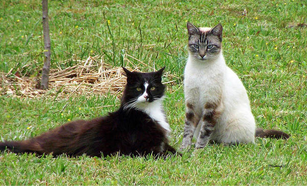 Photograph - Kittycat And Zing by Duane McCullough