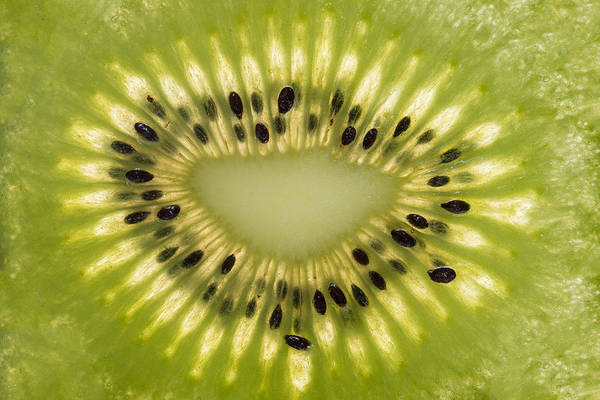 Wall Art - Photograph - Kiwi Detail by Steve Gadomski