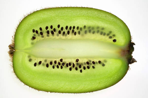 Kiwifruit Photograph - Kiwi Fruit (lengthwise Slice), Backlit by Foodcollection