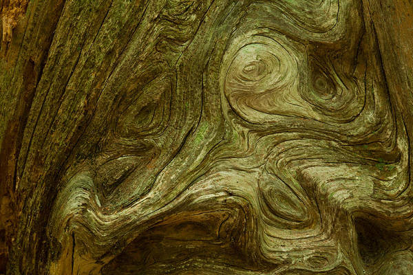 Photograph - Knarly Grain On Cedar Snag by Daniel Reed