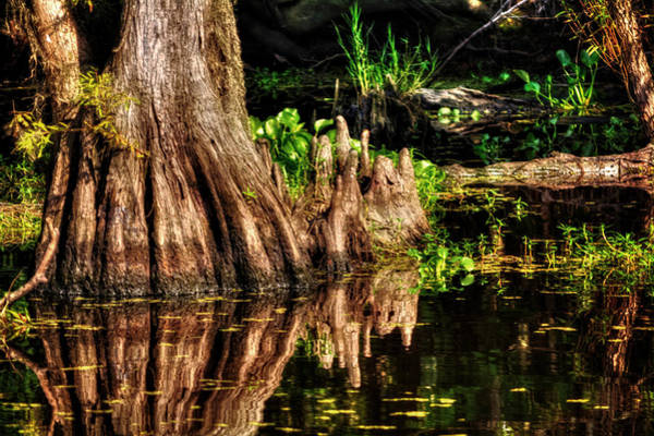 Cypress Knees Photograph - Knees Deep In A Louisiana Bayou by Greg and Chrystal Mimbs