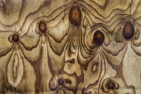 Photograph - Knots In Wet Plywood by Colin Monteath