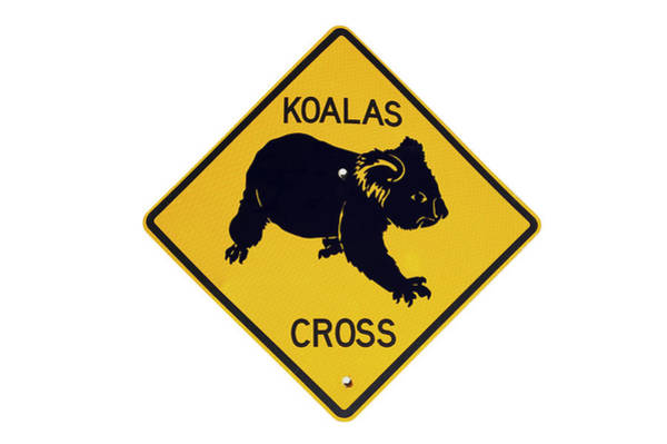 Cutout Wall Art - Photograph - Koala Crossing Warning Sign, Australia by David Wall
