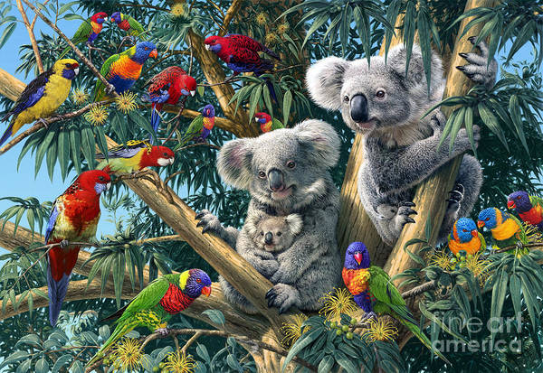 Parrot Digital Art - Koala Outback by MGL Meiklejohn Graphics Licensing