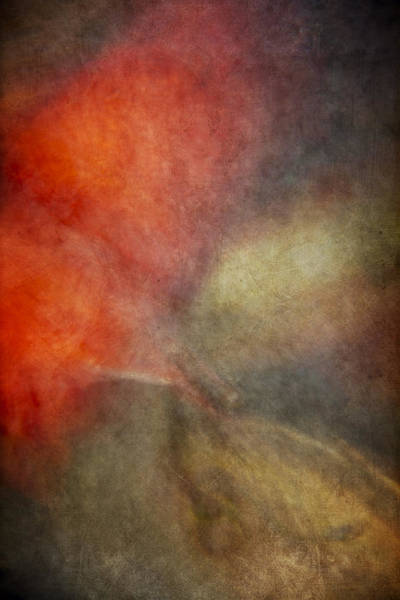 Wall Art - Photograph - Koi Abstract by Margie Hurwich