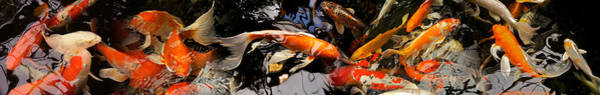 Carp Photograph - Koi Carp by Panoramic Images