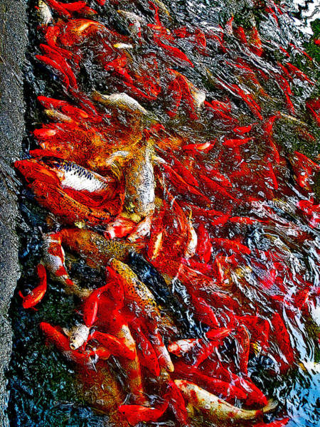Made In Japan Wall Art - Photograph - Koi. Next To The Forbidden City. Beijing. China. by Andy Za