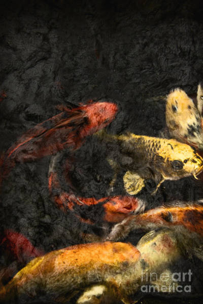 Ornamental Fish Photograph - Koi Pond by Margie Hurwich