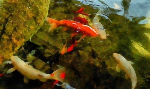 Photograph - Koi Pond by Michelle Calkins