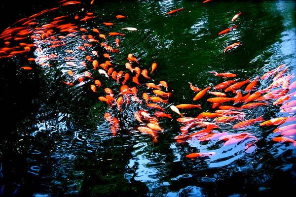 Photograph - Koi by HweeYen Ong
