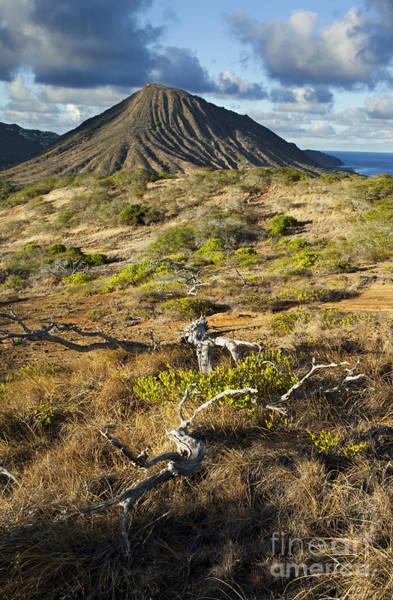Photograph - Koko Crater And Tree Snag by Charmian Vistaunet