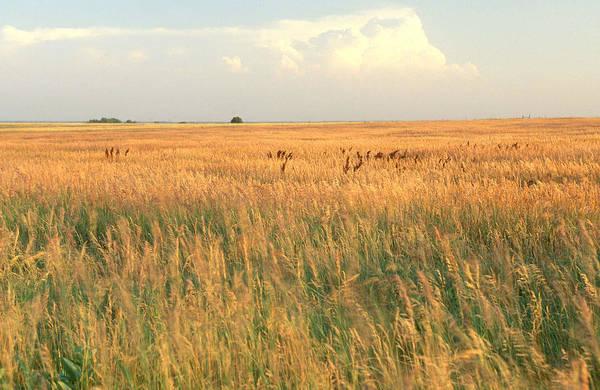 Wall Art - Photograph - Konza Prairie In Kansas by James Steinberg