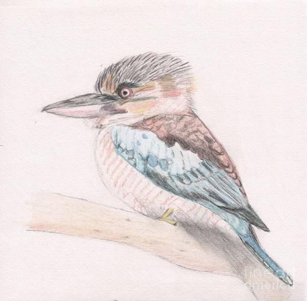 Drawing - Kookaburra Cuteness by Barefoot Bodeez Art