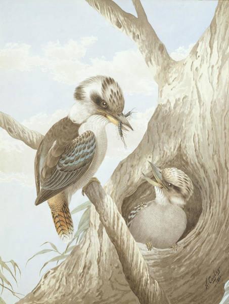 Australian Wildlife Wall Art - Drawing - Kookaburras Feeding At A Nest by Neville Henry Peniston Cayley