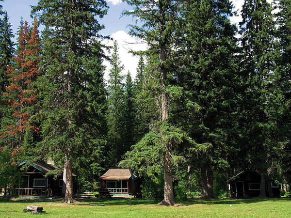 Photograph - Kootenay Park Lodge Cabins by Gerry Bates