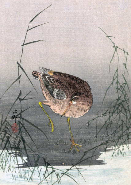 Wall Art - Painting - Koson Snipe Bird, C1910 by Granger