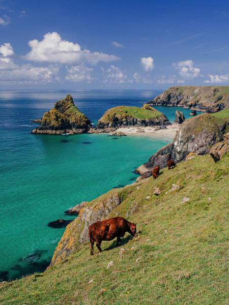 Sea Cow Photograph - Kynance Cove, Cornwall, Uk by Doug Armand