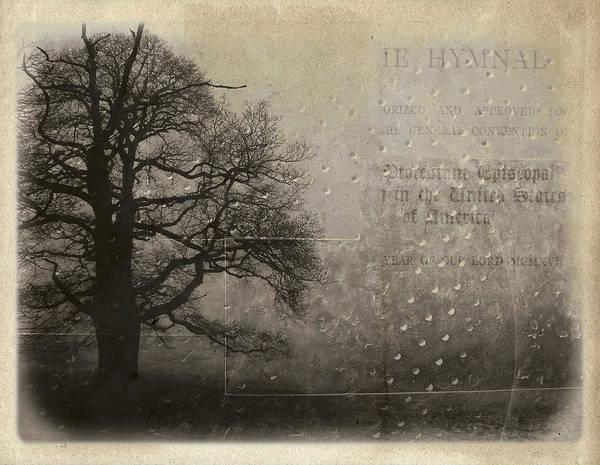 Aimelle Photograph - L Arbre De Vie - 33d02 by Variance Collections