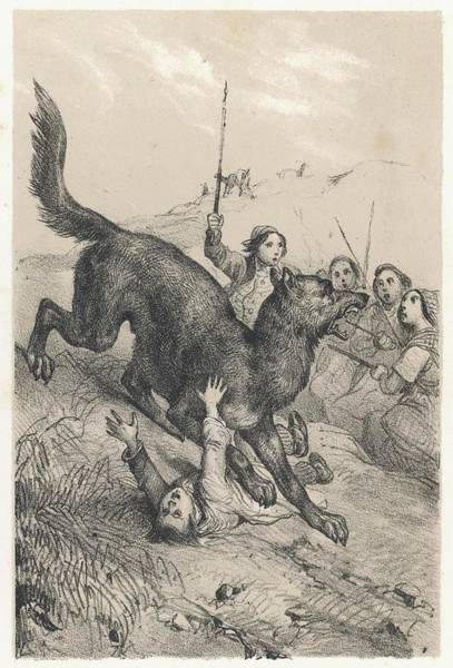 Wall Art - Drawing - La Bete Du Gevaudan  The Beast Attacked by Mary Evans Picture Library