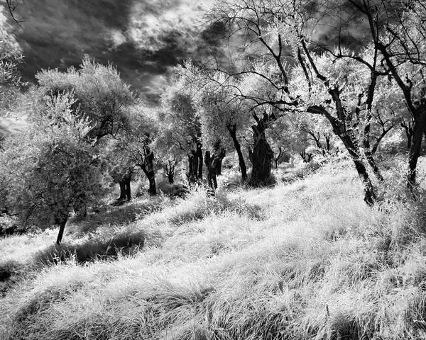 Photograph - La Foresta Incantata by William Beuther