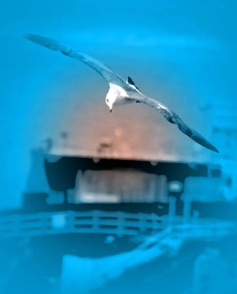 Digital Art - La Jolla Seagull II by Visual Artist Frank Bonilla