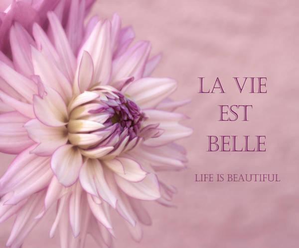 Photograph - La Vie Est Belle by Kim Hojnacki