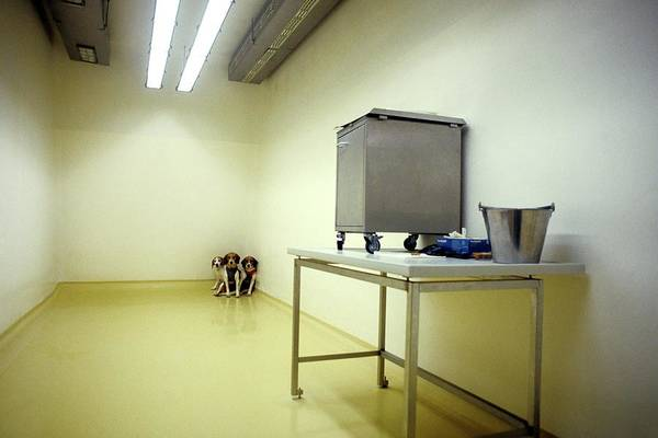 Wall Art - Photograph - Laboratory Dogs by Patrick Landmann/science Photo Library
