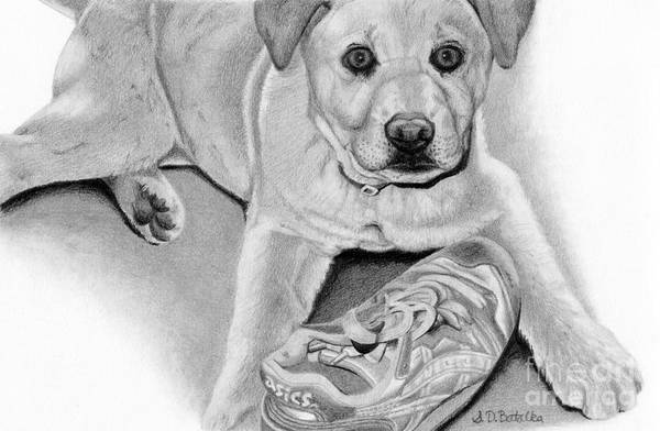 Chewing Wall Art - Drawing - Sneaker Snatcher- Labrador And Chow Chowx Mix by Sarah Batalka