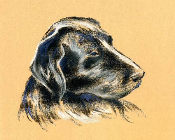 Pastel - Labrador Retriever - Black Dog Pastel Drawing by MM Anderson