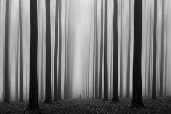 Trunks Photograph - Labyrinth by Jochen Bongaerts
