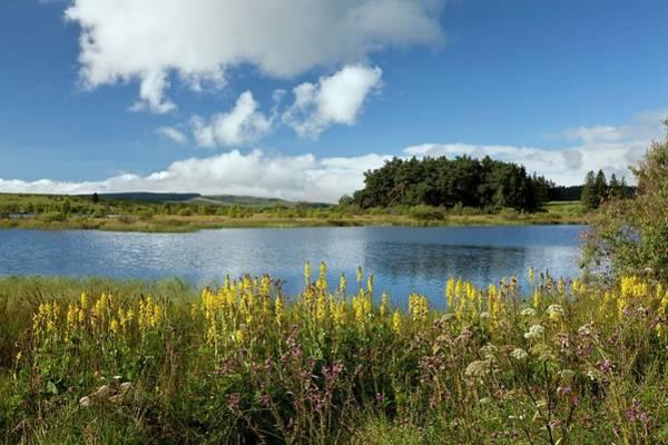 Angiosperm Photograph - Lac De Bourdouze by Bob Gibbons
