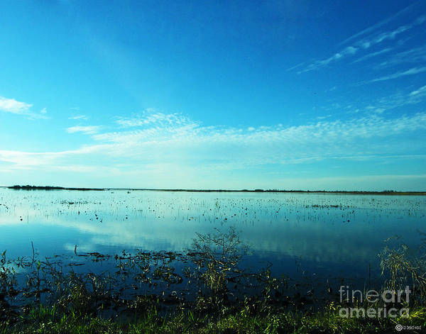 Photograph - Lacassine Nwr Pool Blue And Green by Lizi Beard-Ward