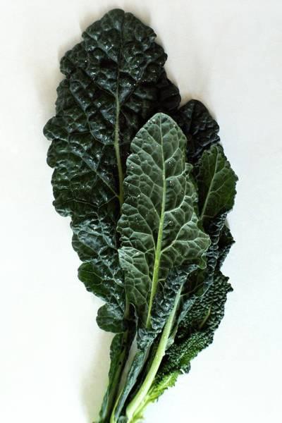 January 1st Photograph - Lacinato Kale by Romulo Yanes