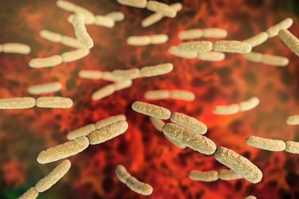 Anaerobe Wall Art - Photograph - Lactobacillus Crispatus Bacteria by Kateryna Kon/science Photo Library