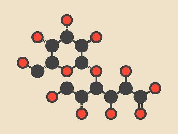 Molecular Wall Art - Photograph - Lactobionic Acid Molecule by Molekuul/science Photo Library