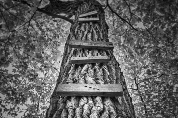 Woods Photograph - Ladder To The Treehouse by Scott Norris