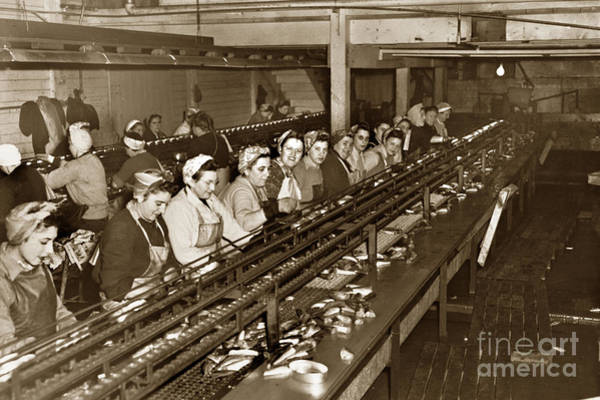 Photograph - Ladies Packing Sardines In One Pound Oval Cans In One Of The Over 20 Cannery's Circa 1948 by California Views Archives Mr Pat Hathaway Archives