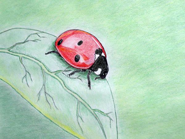 Lady Bug Art Print