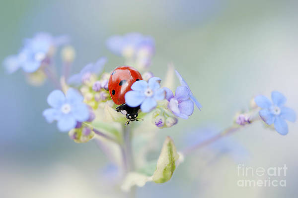 Ladybird Wall Art - Photograph - Lady In Hiding by Jacky Parker